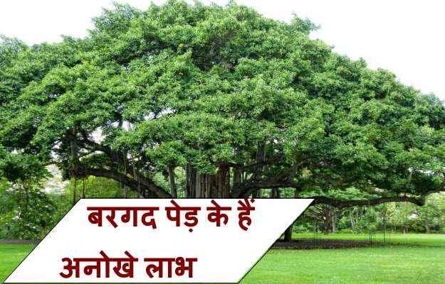 Trees ke labh - Essay Sample - Writing Service
